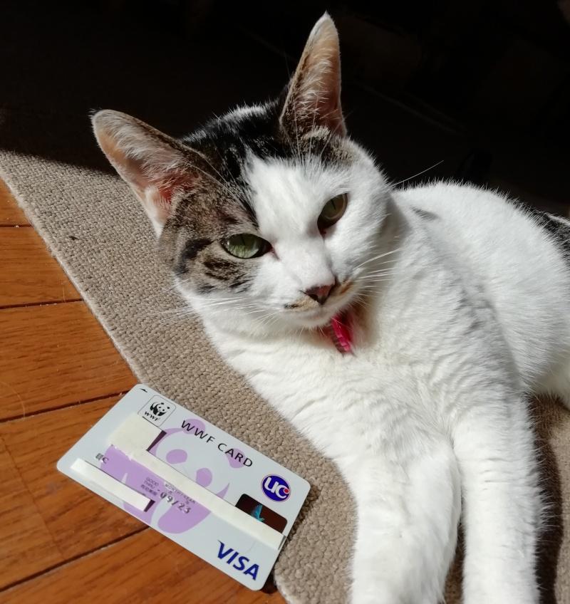 WWFカードと猫
