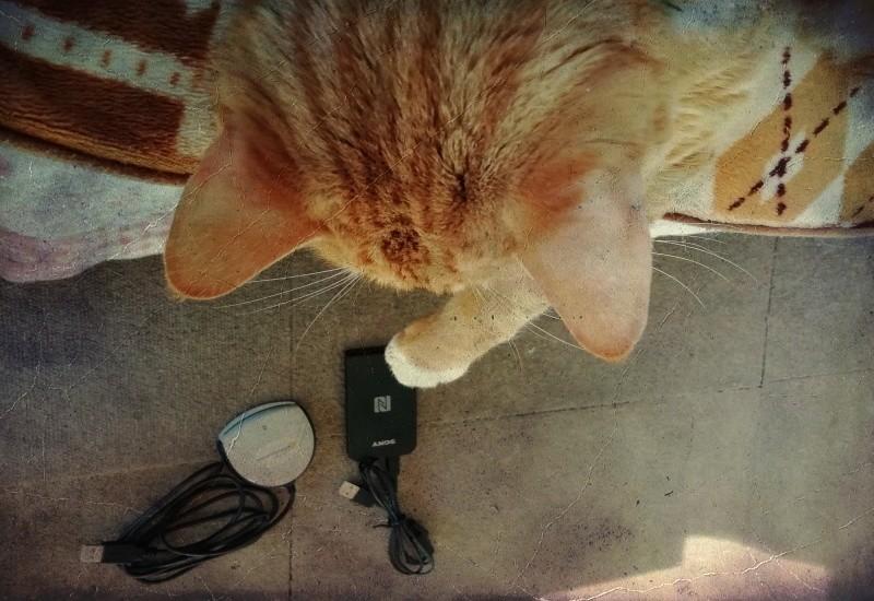 猫とICカードリーダー