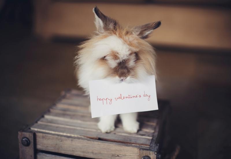 ウサギによるハッピーバレンタイン