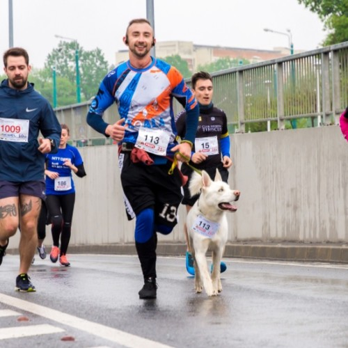 犬と一緒にマラソン