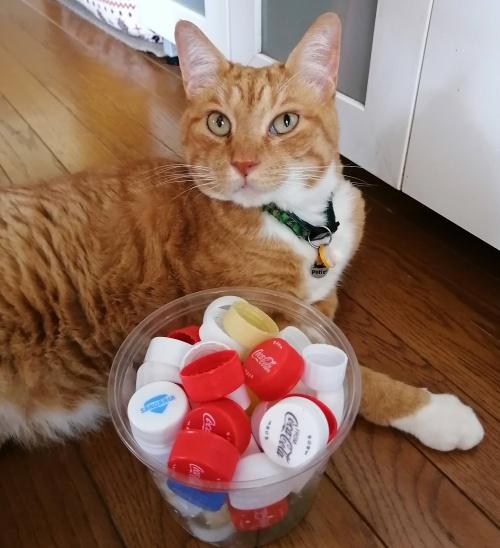 ペットボトルキャップと猫