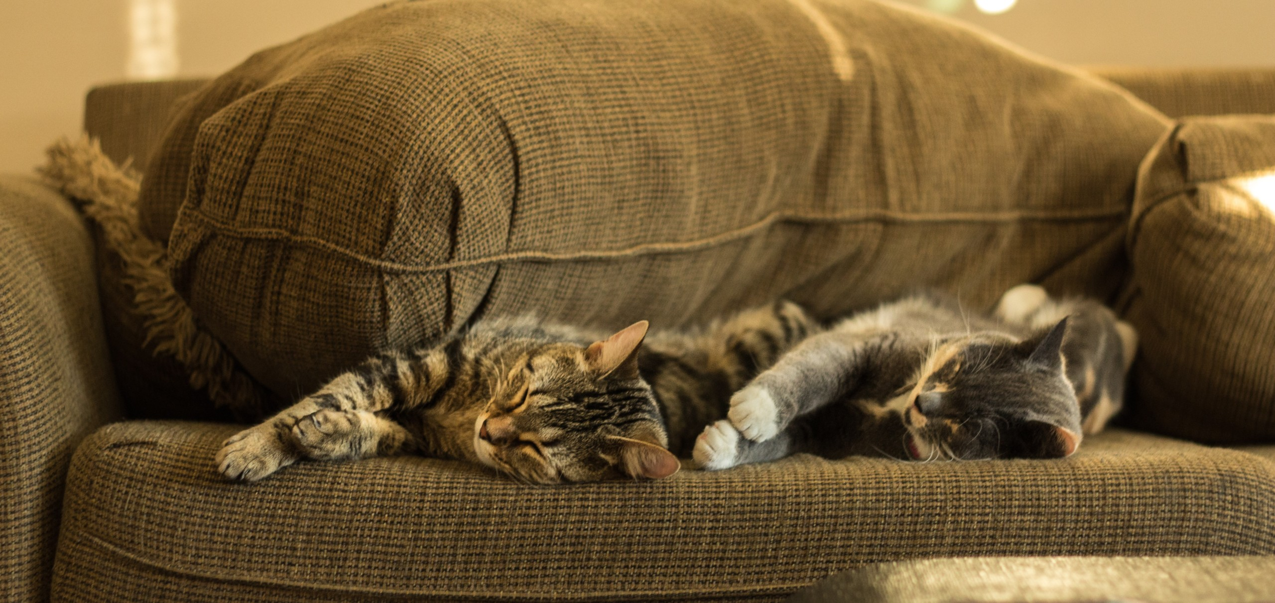 ソファーに寝る猫