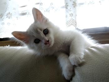 子猫のホップ