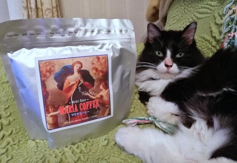 マリアコーヒーと猫