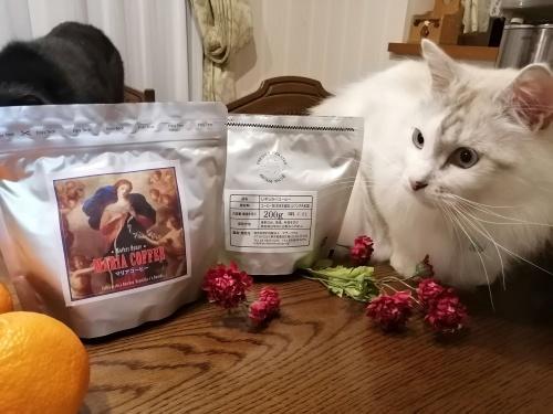 マリアコーヒーと猫2